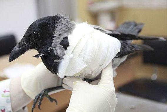 птица сломала крыло картинки спецтехники